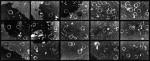 Resti di un chiosco di bibite a Trinità dei Monti, 1999, cm 85x208 (15 fotografie  cm 27x40);Photographer Riccardo Pieroni